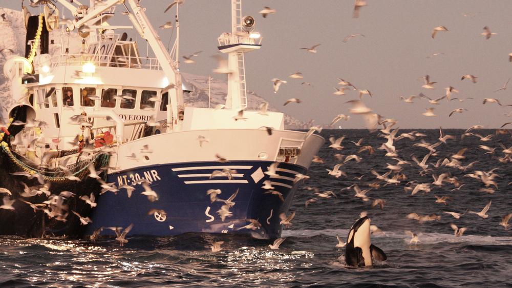 Spar penger med planlagt landligge for fiskebåten